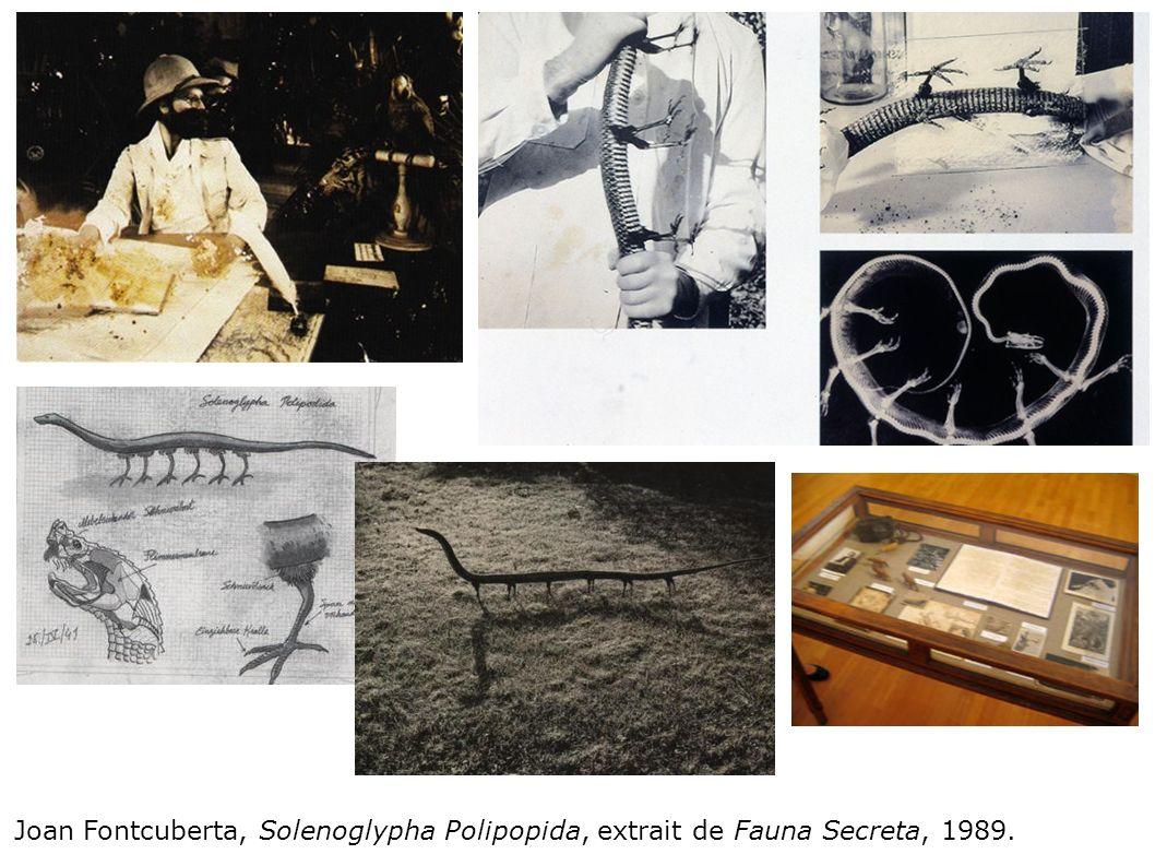 Joan Fontcuberta, Solenoglypha Polipopida, extrait de Fauna Secreta, 1989.