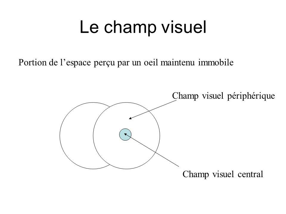 Le champ visuel Portion de l'espace perçu par un oeil maintenu immobile. Champ visuel périphérique.