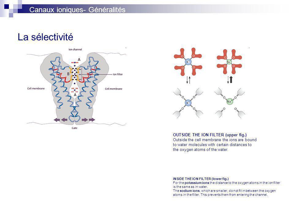 La sélectivité Canaux ioniques- Généralités