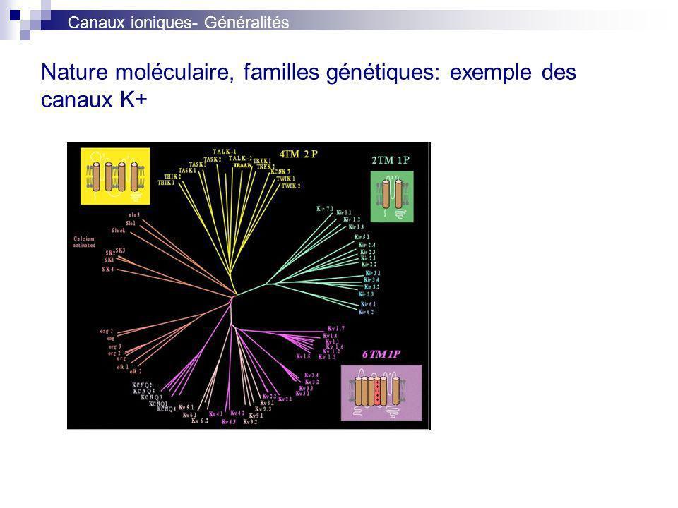 Nature moléculaire, familles génétiques: exemple des canaux K+
