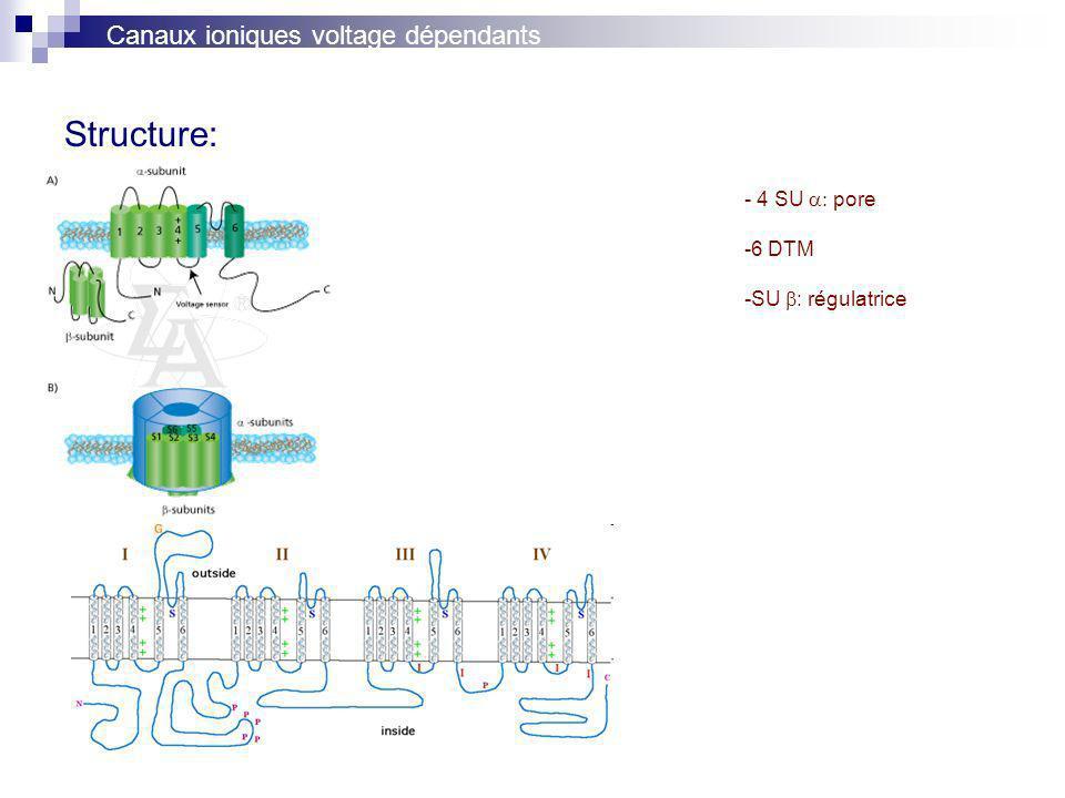 Structure: Canaux ioniques voltage dépendants - 4 SU a: pore 6 DTM