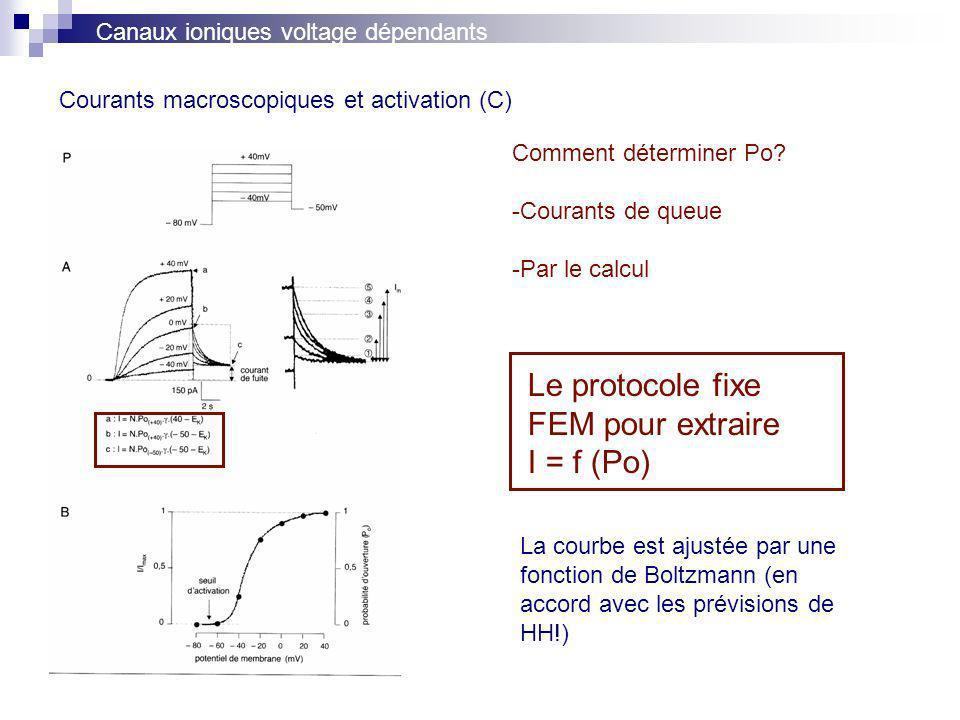 Courants macroscopiques et activation (C)