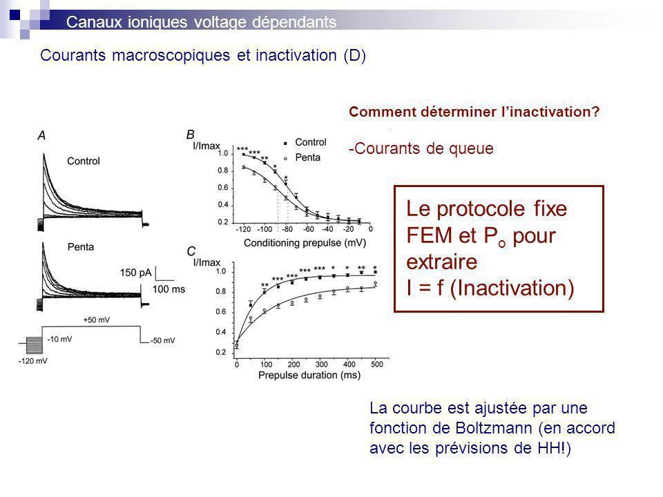 Courants macroscopiques et inactivation (D)
