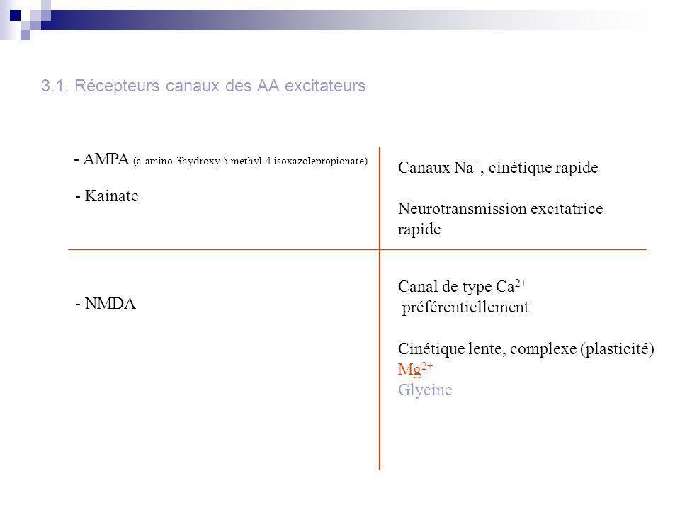 3.1. Récepteurs canaux des AA excitateurs