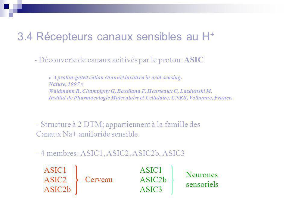 3.4 Récepteurs canaux sensibles au H+