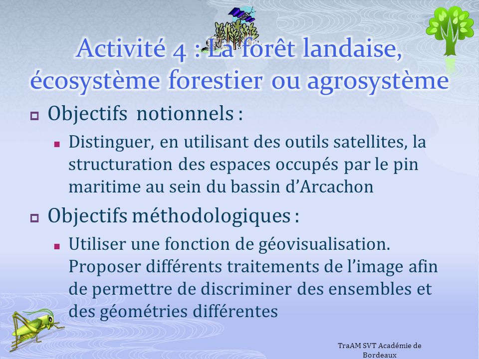 Activité 4 : La forêt landaise, écosystème forestier ou agrosystème