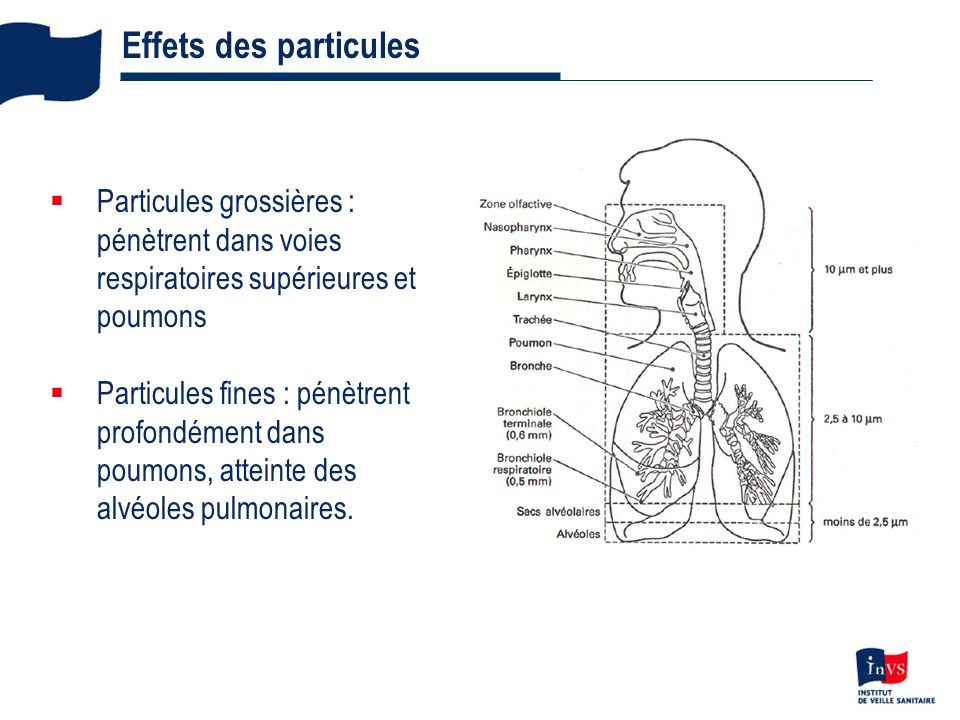 Effets des particules Particules grossières : pénètrent dans voies respiratoires supérieures et poumons.