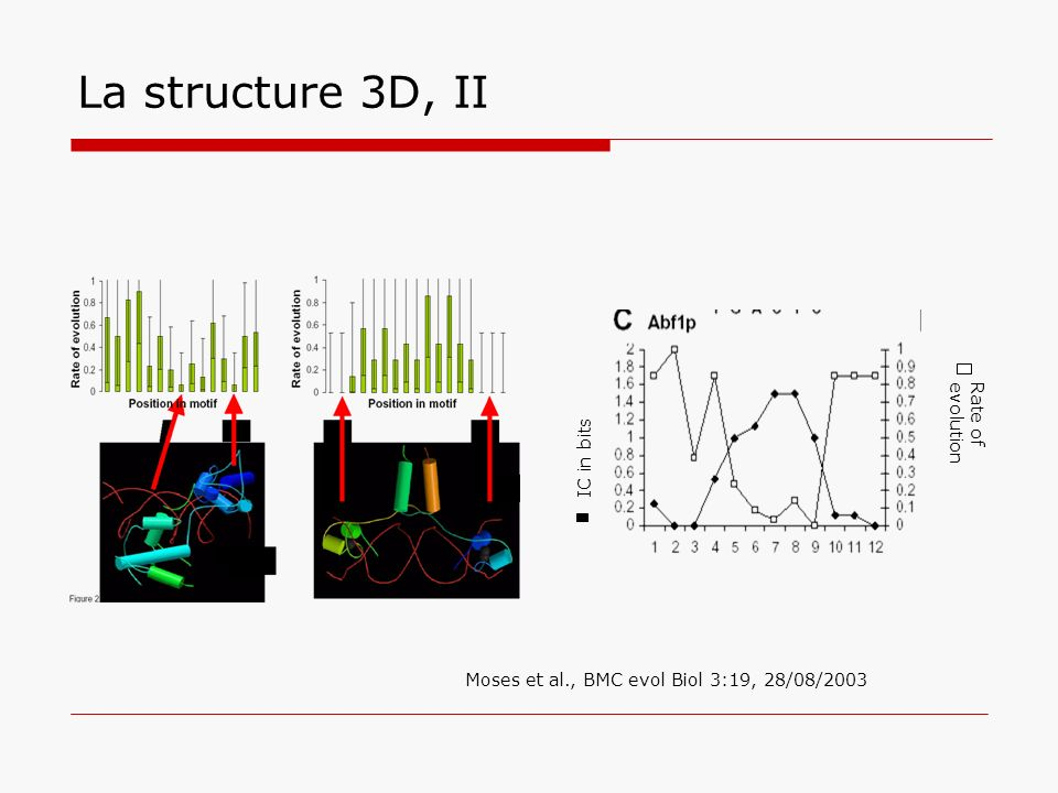 La structure 3D, II Rate of evolution IC in bits