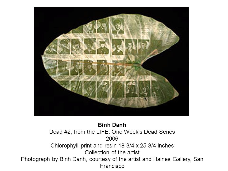 Binh Danh Dead #2, from the LIFE: One Week s Dead Series 2006 Chlorophyll print and resin 18 3/4 x 25 3/4 inches Collection of the artist Photograph by Binh Danh, courtesy of the artist and Haines Gallery, San Francisco