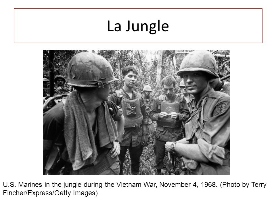 La Jungle U.S. Marines in the jungle during the Vietnam War, November 4, 1968.