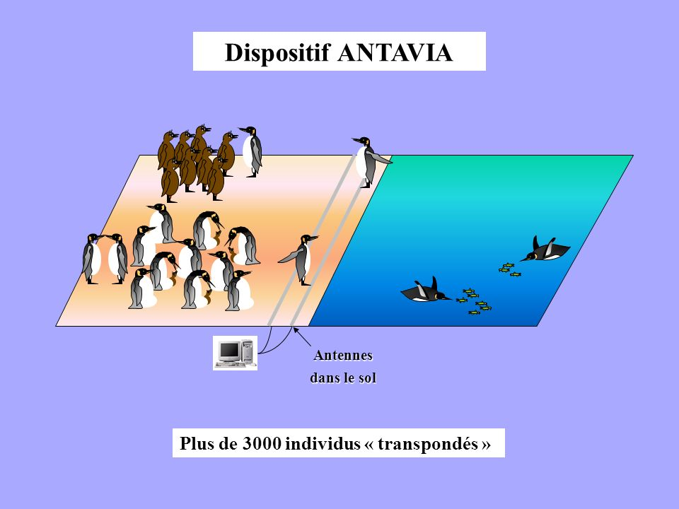 Dispositif ANTAVIA Plus de 3000 individus « transpondés » Antennes