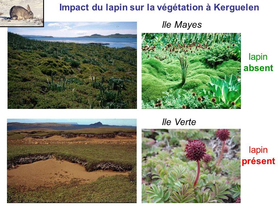 Impact du lapin sur la végétation à Kerguelen