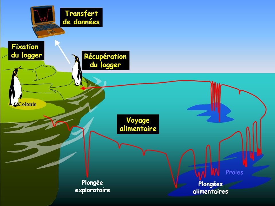 Transfert de données Fixation du logger Récupération Voyage