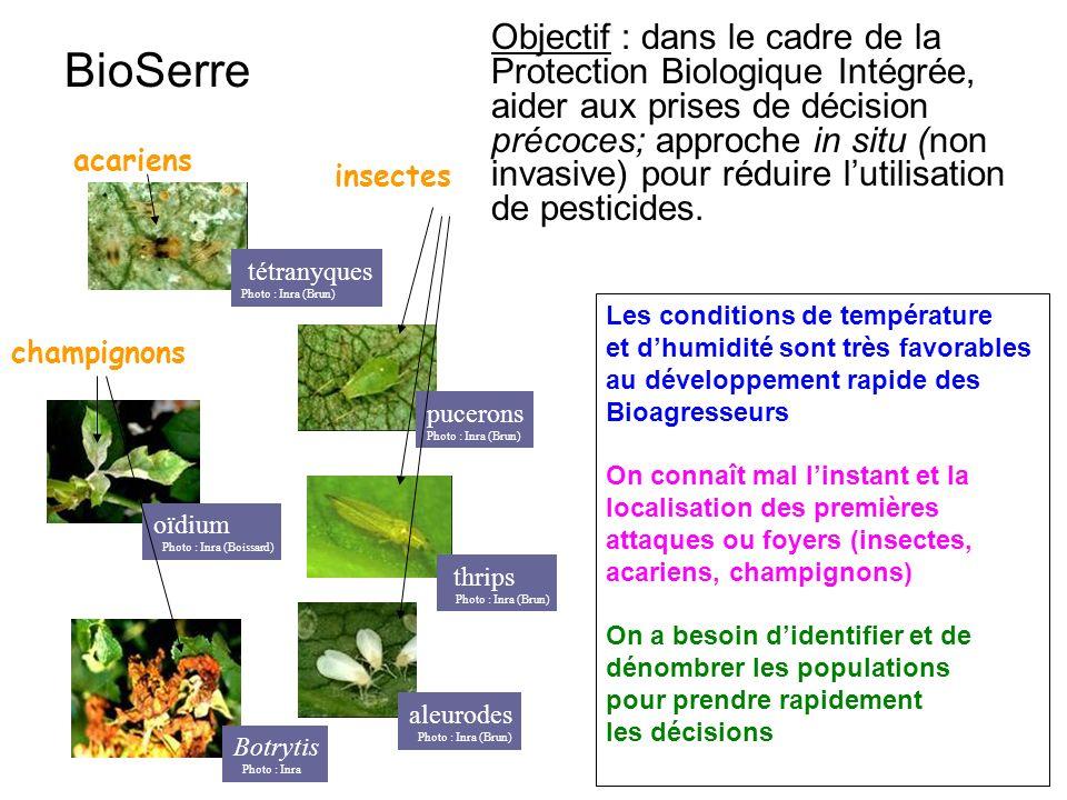 Objectif : dans le cadre de la Protection Biologique Intégrée, aider aux prises de décision précoces; approche in situ (non invasive) pour réduire l'utilisation de pesticides.