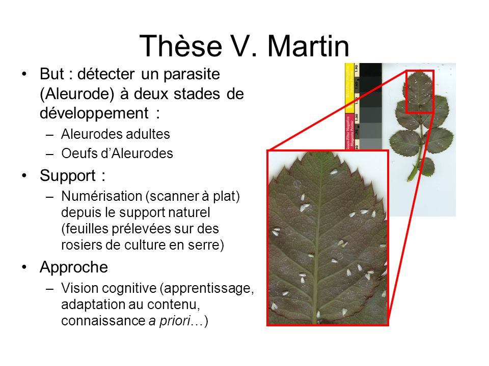 Thèse V. Martin But : détecter un parasite (Aleurode) à deux stades de développement : Aleurodes adultes.