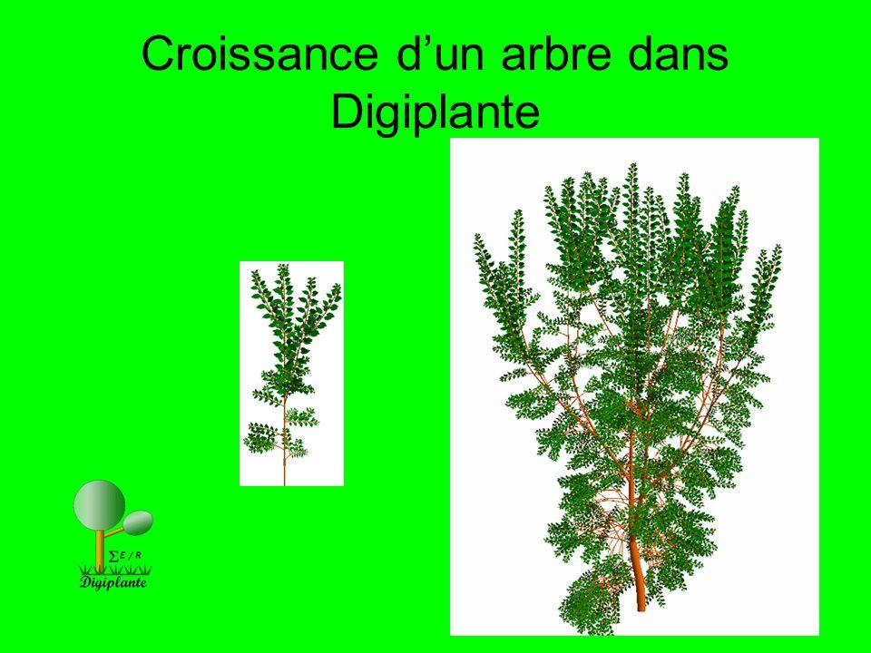 Croissance d'un arbre dans Digiplante