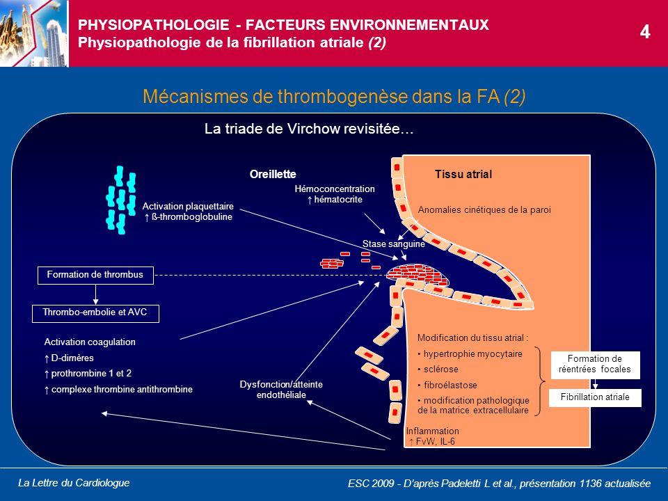 Mécanismes de thrombogenèse dans la FA (2)