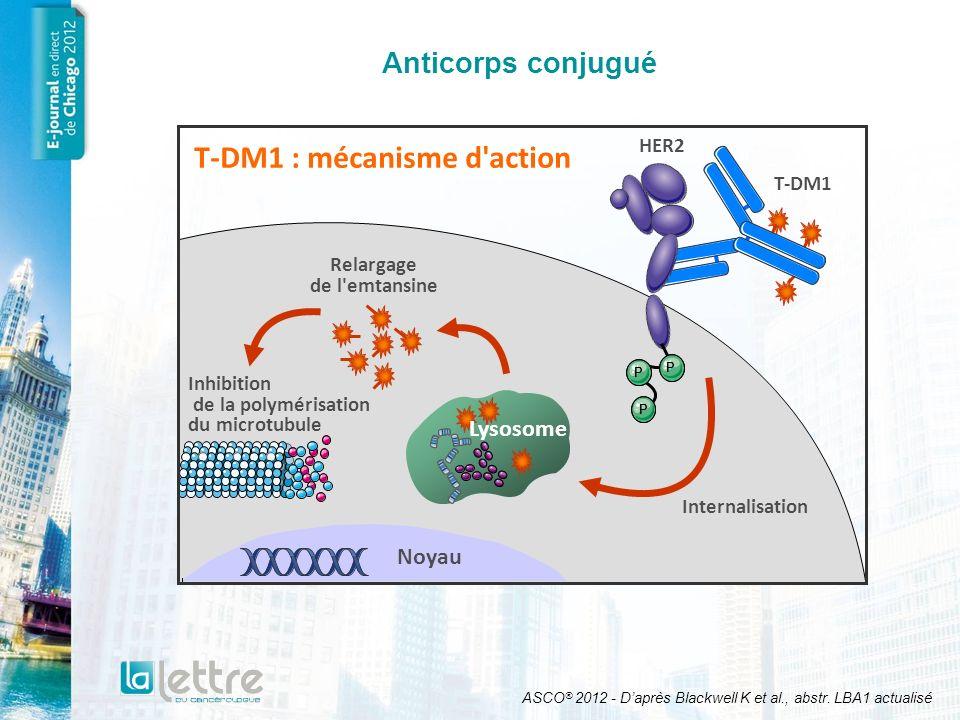 T-DM1 : mécanisme d action Relargage de l emtansine