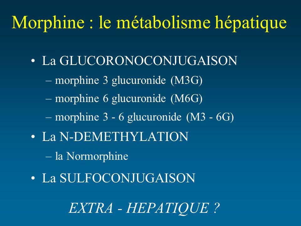 Morphine : le métabolisme hépatique