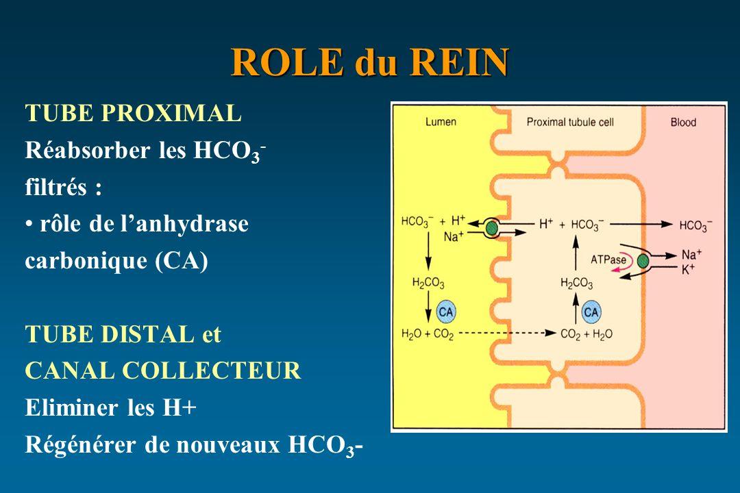 ROLE du REIN TUBE PROXIMAL Réabsorber les HCO3- filtrés :