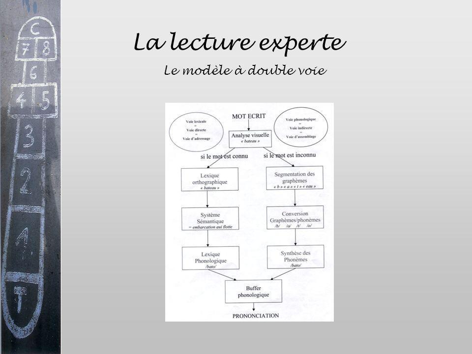 La lecture experte Le modèle à double voie