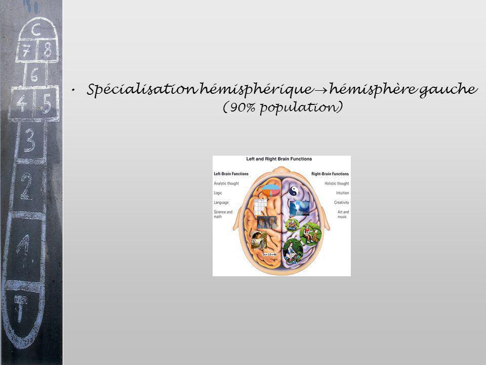Spécialisation hémisphérique hémisphère gauche