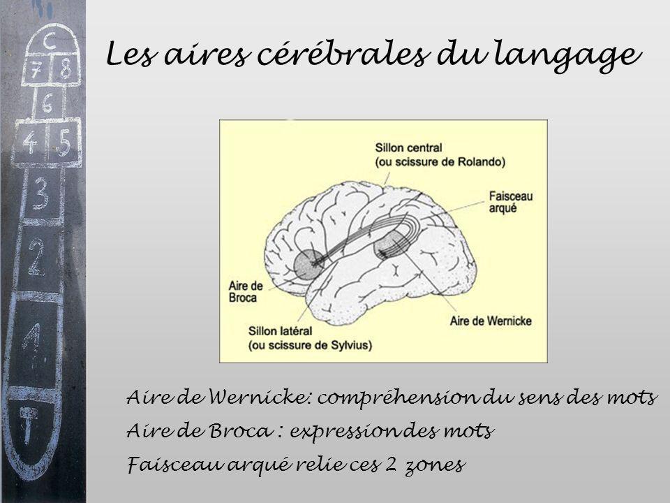Les aires cérébrales du langage