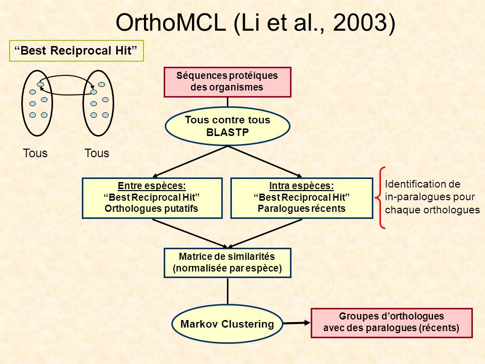 OrthoMCL (Li et al., 2003) Best Reciprocal Hit Tous Tous contre tous