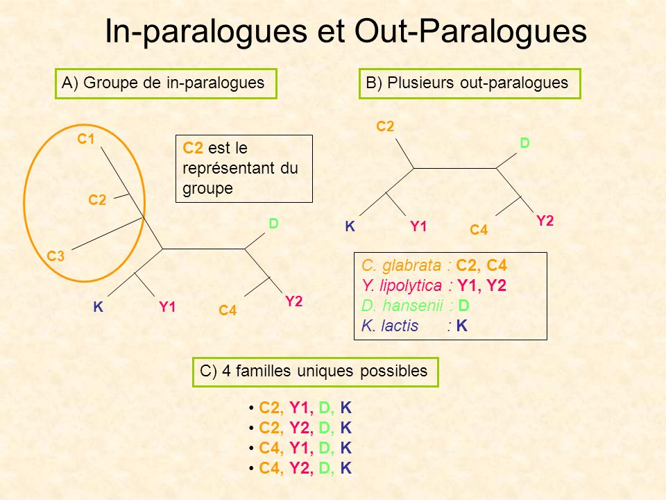 In-paralogues et Out-Paralogues