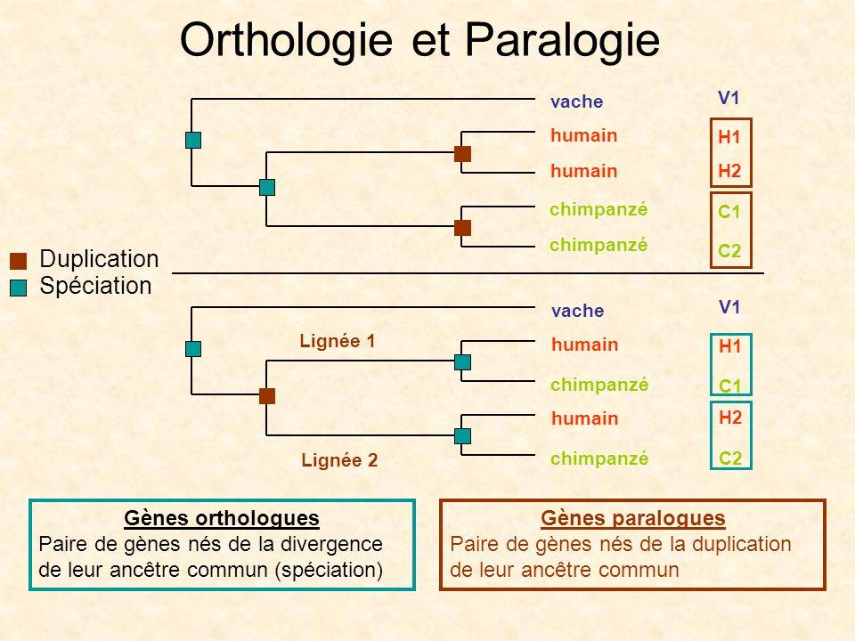 Orthologie et Paralogie