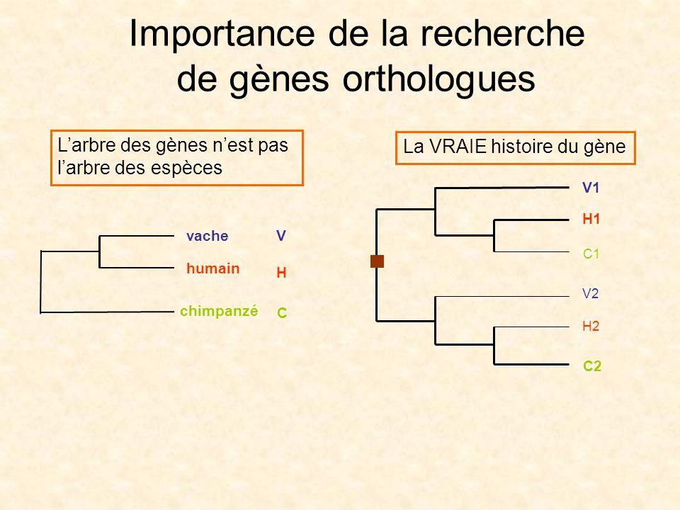 Importance de la recherche de gènes orthologues