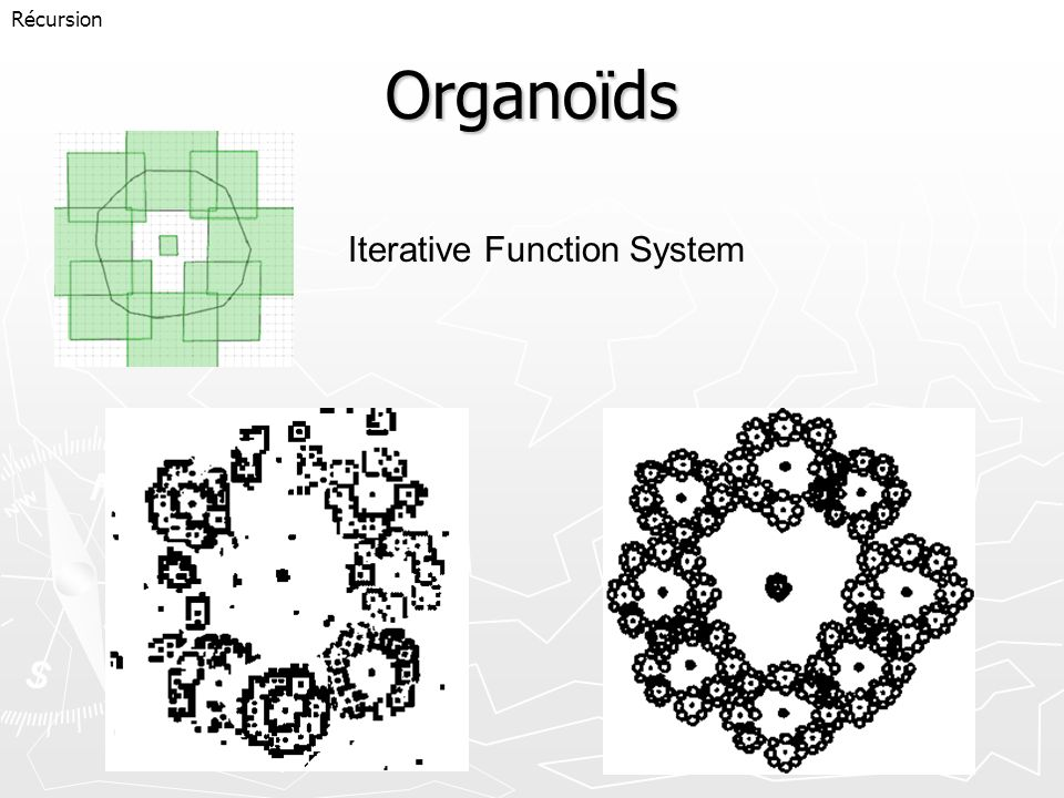 Récursion Organoïds Iterative Function System