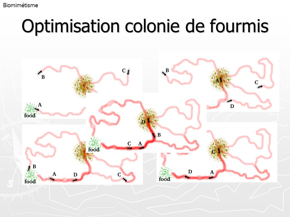 Optimisation colonie de fourmis