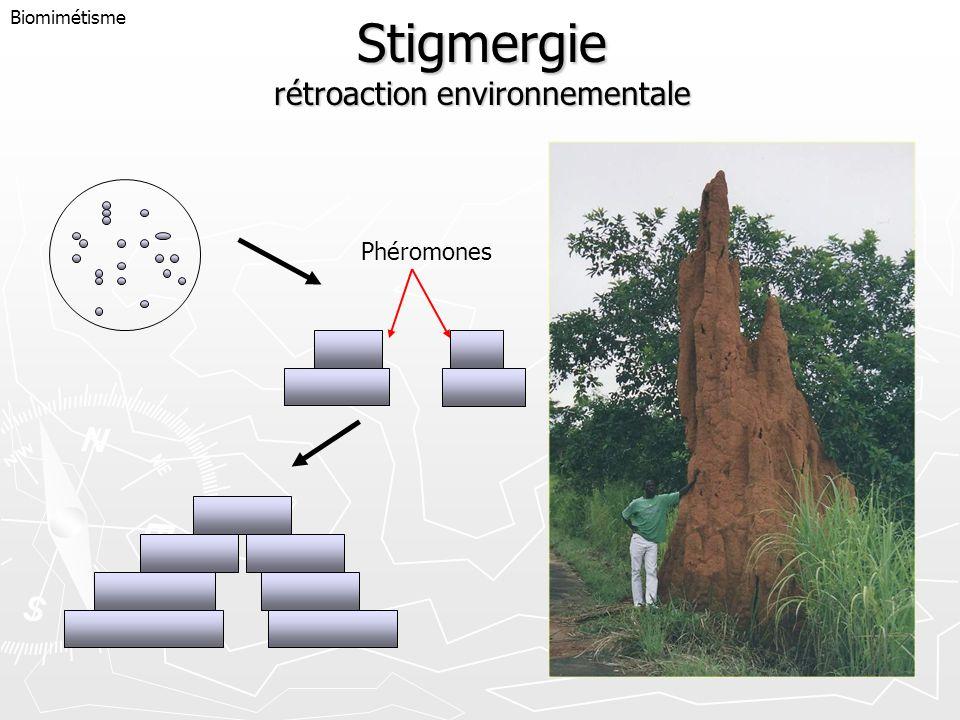 Stigmergie rétroaction environnementale
