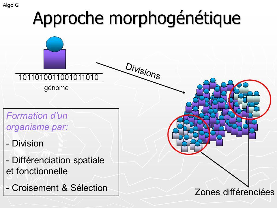 Approche morphogénétique