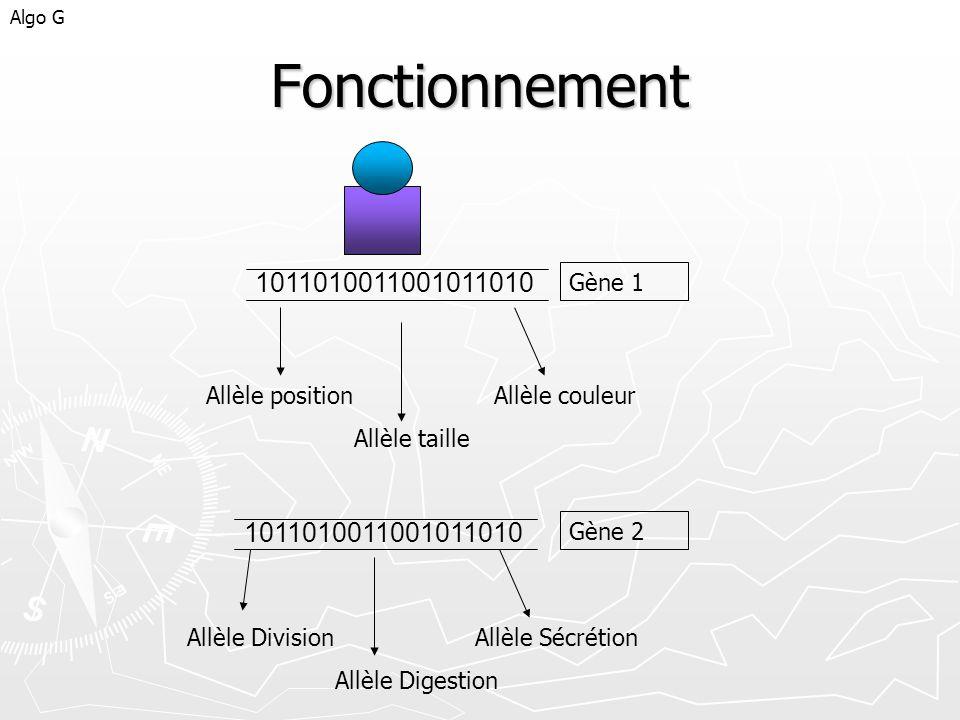Algo GFonctionnement. 1011010011001011010. Gène 1. Allèle position Allèle couleur. Allèle taille. 1011010011001011010.