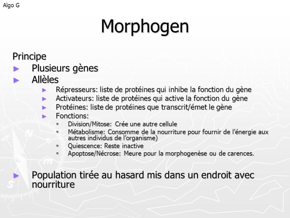 Morphogen Principe Plusieurs gènes Allèles