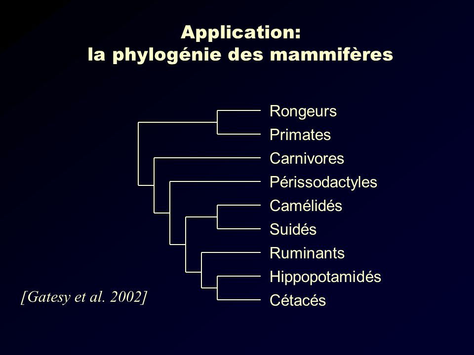 Application: la phylogénie des mammifères
