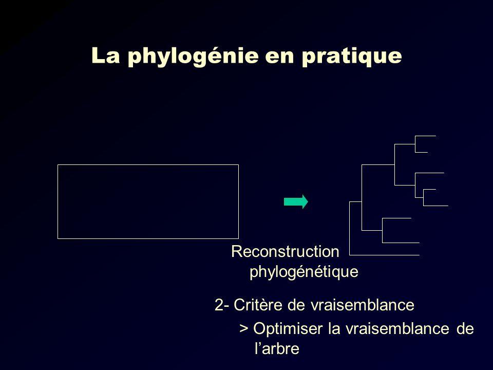 La phylogénie en pratique