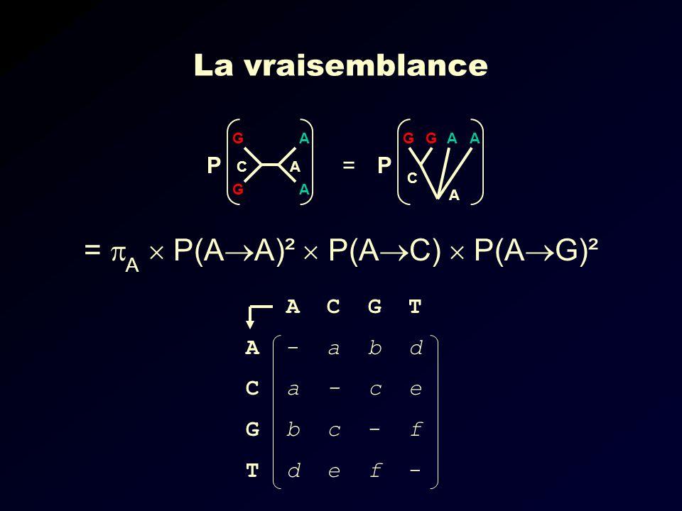 = A  P(AA)²  P(AC)  P(AG)²