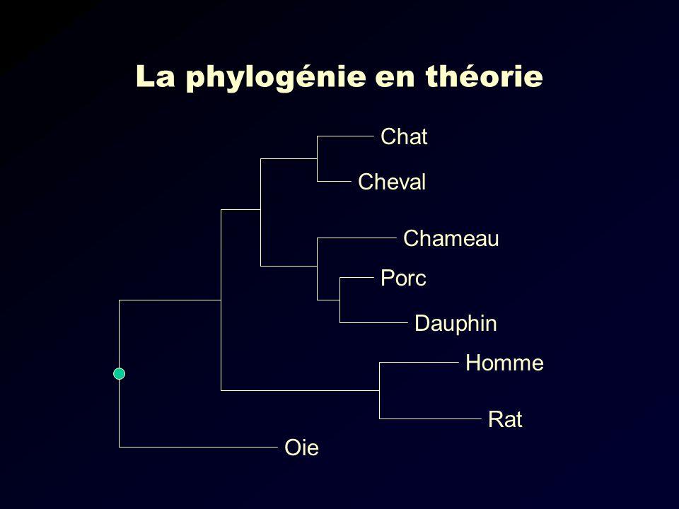 La phylogénie en théorie