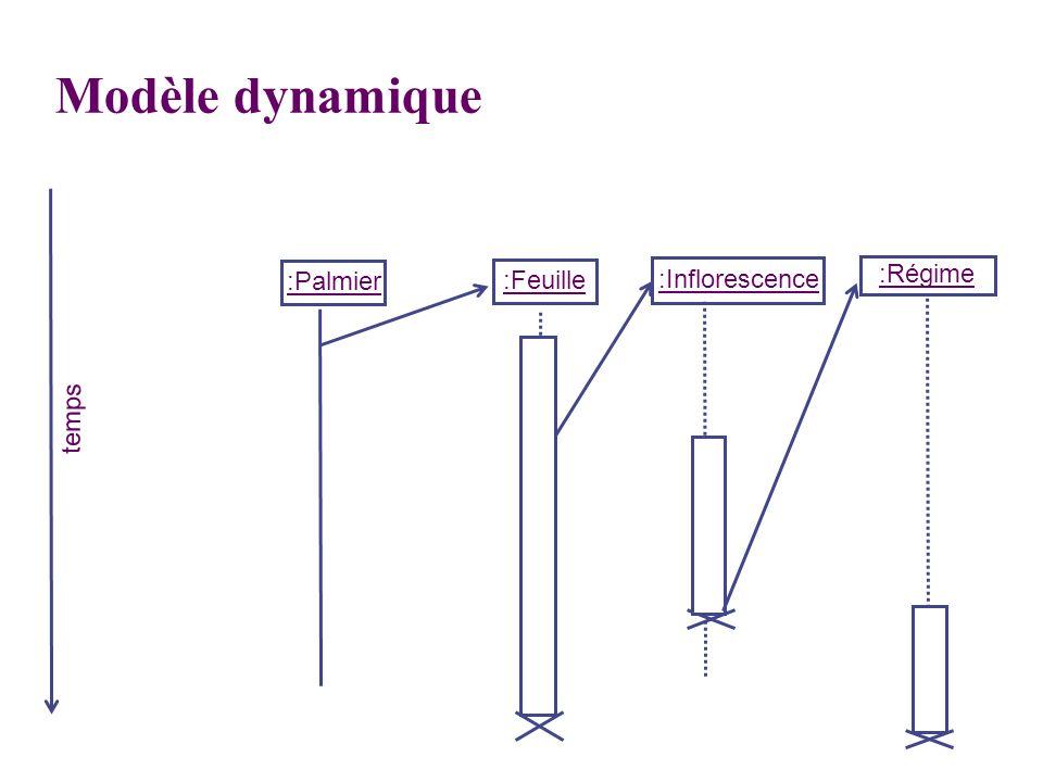Modèle dynamique :Palmier :Feuille :Inflorescence :Régime temps