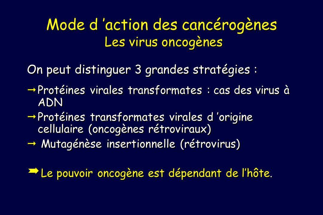 Mode d 'action des cancérogènes Les virus oncogènes
