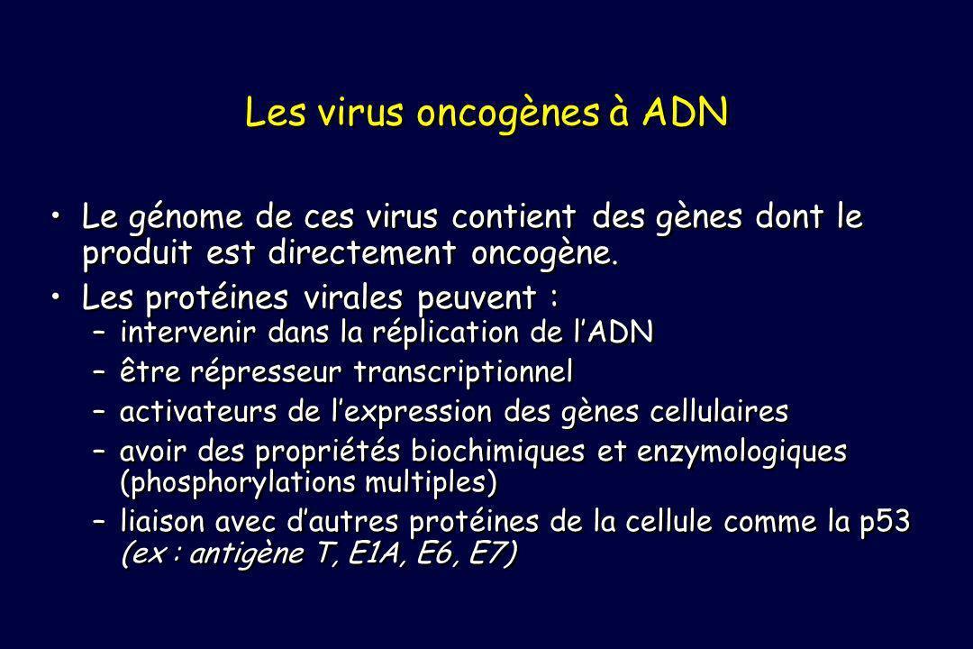 Les virus oncogènes à ADN