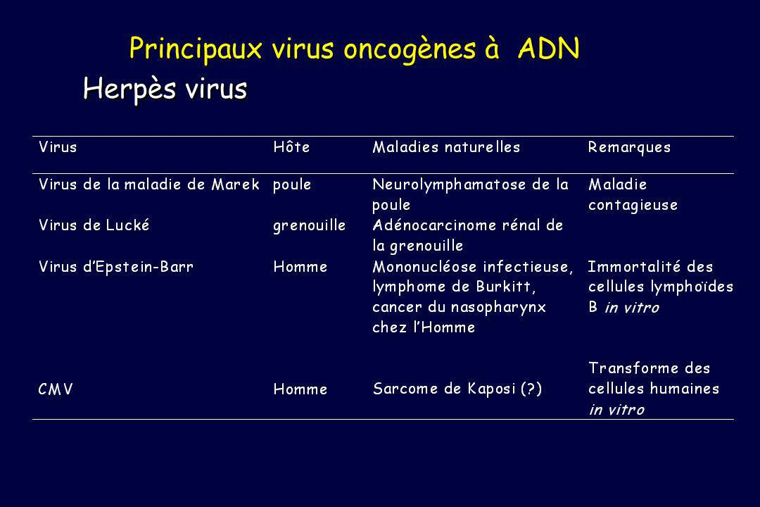 Principaux virus oncogènes à ADN