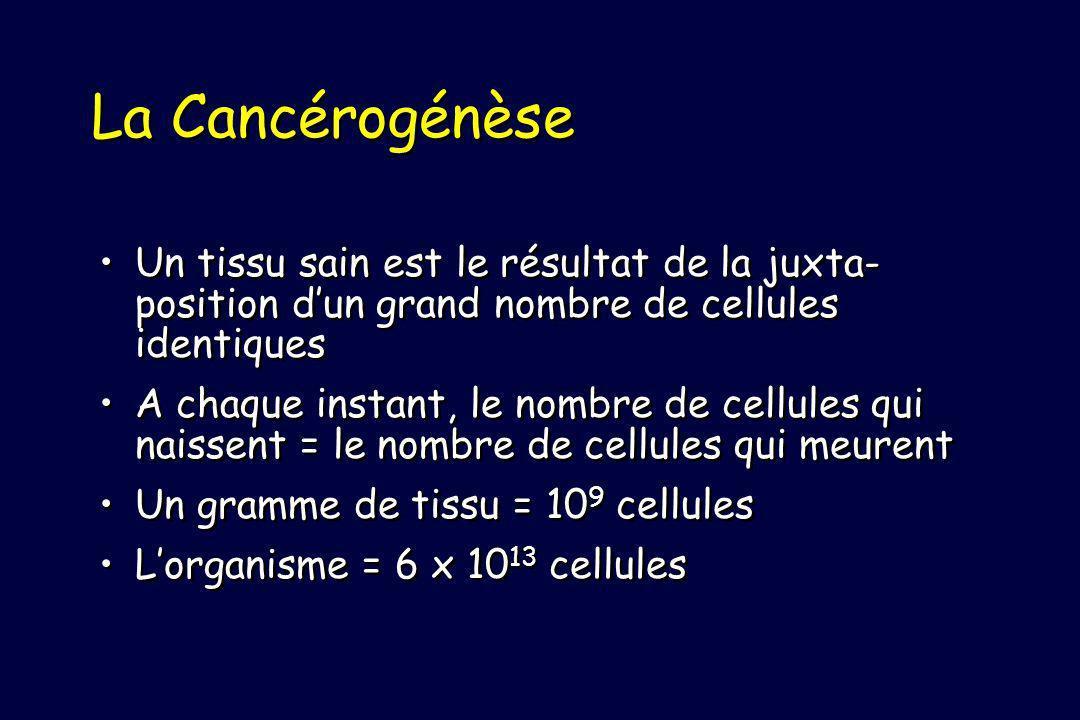 La Cancérogénèse Un tissu sain est le résultat de la juxta-position d'un grand nombre de cellules identiques.