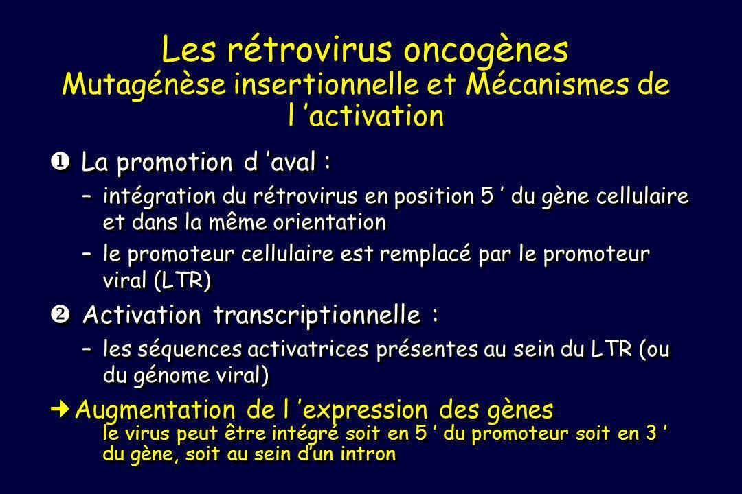 Les rétrovirus oncogènes Mutagénèse insertionnelle et Mécanismes de l 'activation