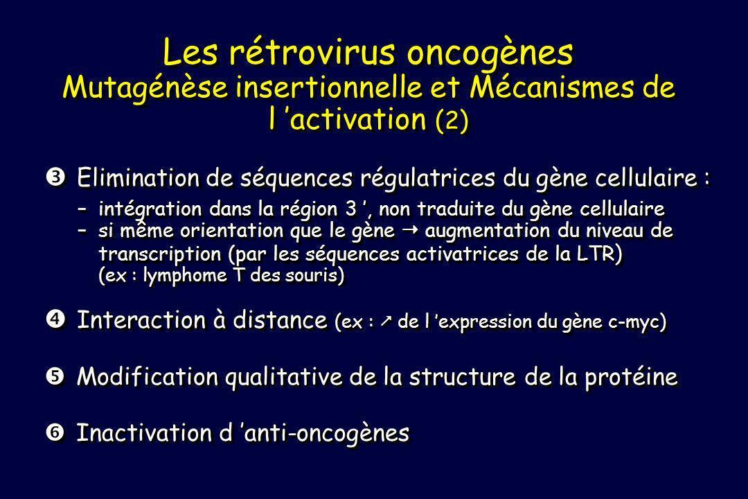 Les rétrovirus oncogènes Mutagénèse insertionnelle et Mécanismes de l 'activation (2)