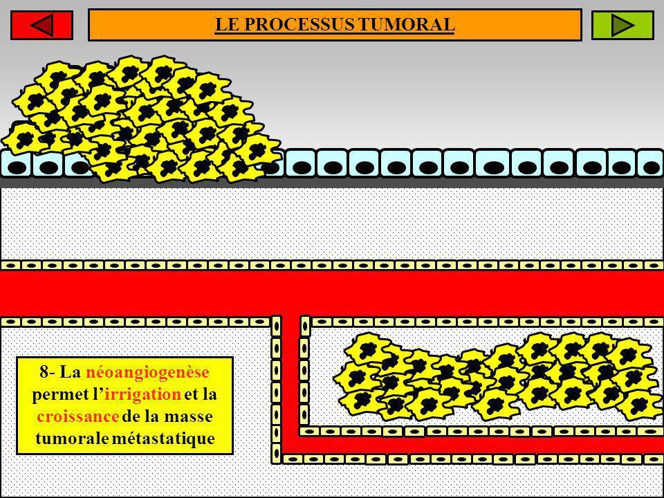 LE PROCESSUS TUMORAL 8- La néoangiogenèse permet l'irrigation et la croissance de la masse tumorale métastatique.