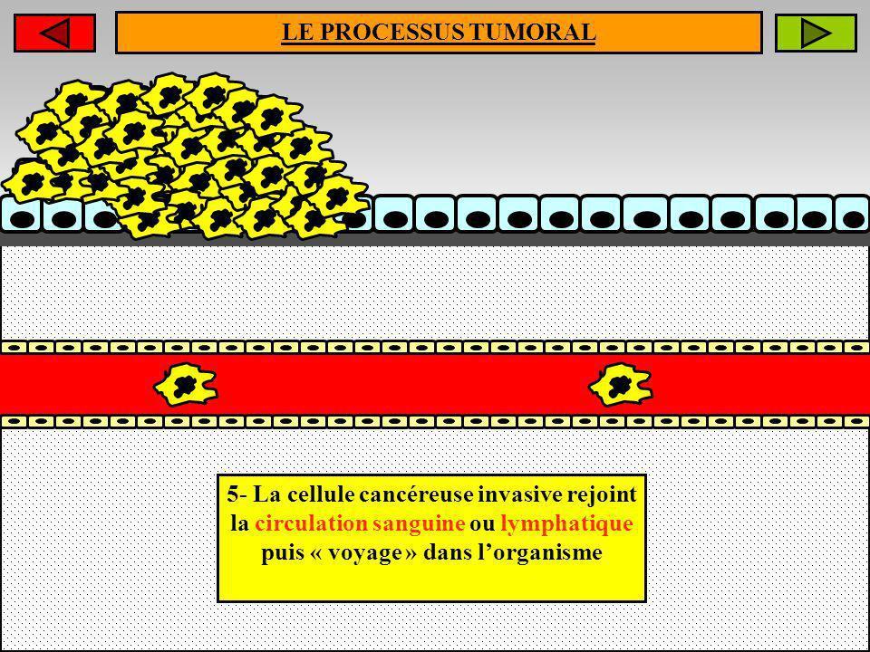 LE PROCESSUS TUMORAL5- La cellule cancéreuse invasive rejoint la circulation sanguine ou lymphatique puis « voyage » dans l'organisme.